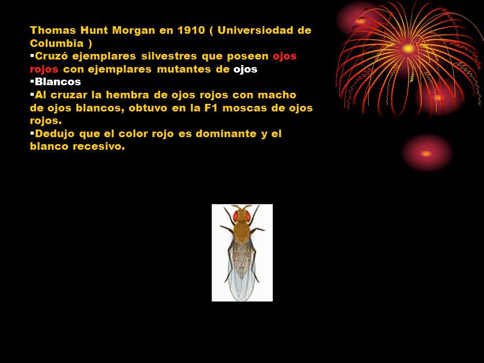 Thomas Hunt Morgan en 1910 ( Universiodad de Columbia ) Cruzó ejemplares silvestres que poseen ojos rojos con ejemplares mutantes de ojos Blancos Al c