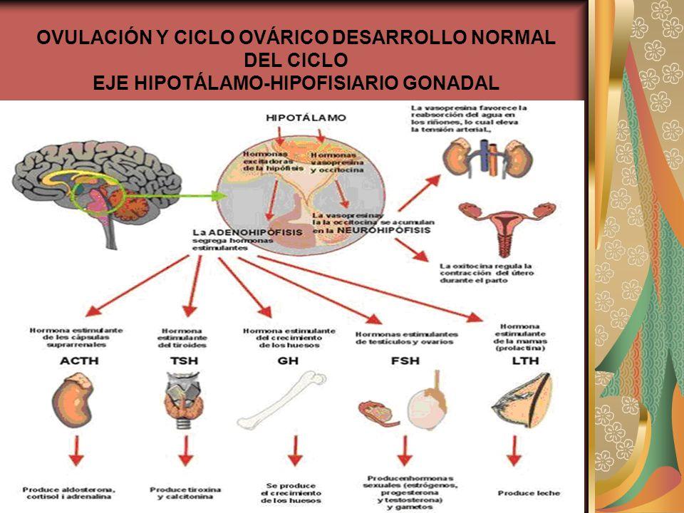 OVULACIÓN Y CICLO OVÁRICO DESARROLLO NORMAL DEL CICLO EJE HIPOTÁLAMO-HIPOFISIARIO GONADAL