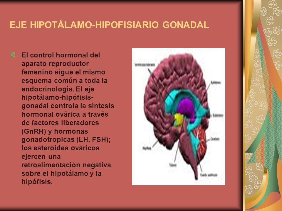 EJE HIPOTÁLAMO-HIPOFISIARIO GONADAL El control hormonal del aparato reproductor femenino sigue el mismo esquema común a toda la endocrinología. El eje