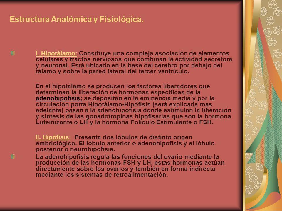 Estructura Anatómica y Fisiológica. I. Hipotálamo: Constituye una compleja asociación de elementos celulares y tractos nerviosos que combinan la activ