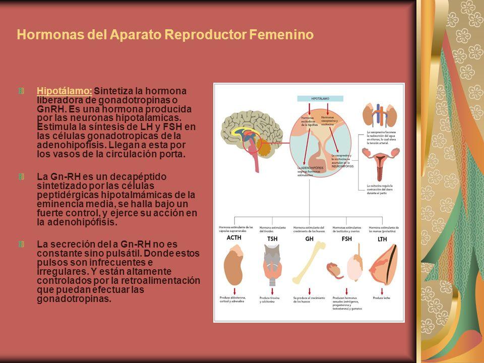 Hormonas del Aparato Reproductor Femenino Hipotálamo: Sintetiza la hormona liberadora de gonadotropinas o GnRH. Es una hormona producida por las neuro