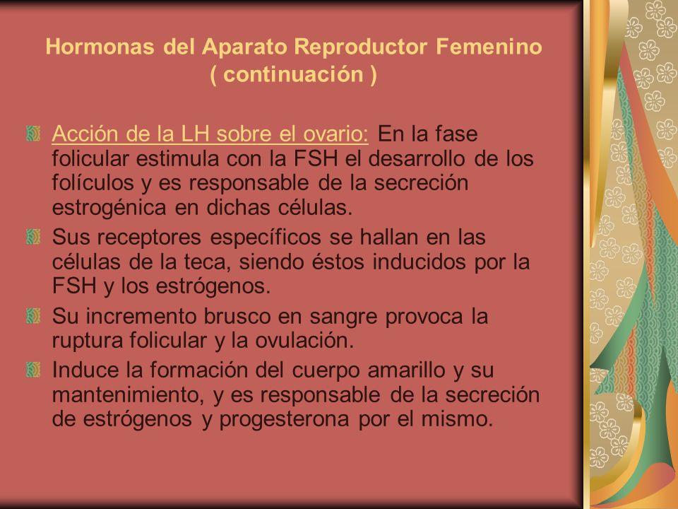 Hormonas del Aparato Reproductor Femenino ( continuación ) Acción de la LH sobre el ovario: En la fase folicular estimula con la FSH el desarrollo de
