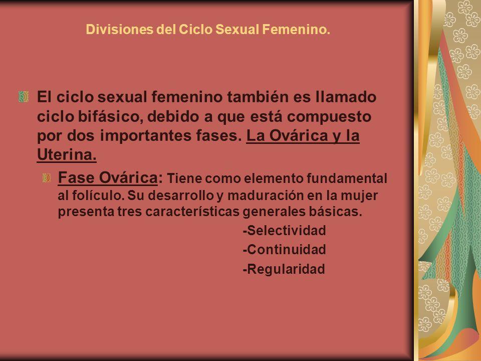 Divisiones del Ciclo Sexual Femenino. El ciclo sexual femenino también es llamado ciclo bifásico, debido a que está compuesto por dos importantes fase