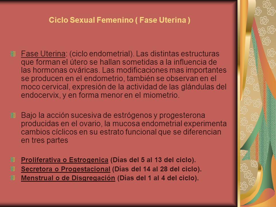 Ciclo Sexual Femenino ( Fase Uterina ) Fase Uterina: (ciclo endometrial). Las distintas estructuras que forman el útero se hallan sometidas a la influ