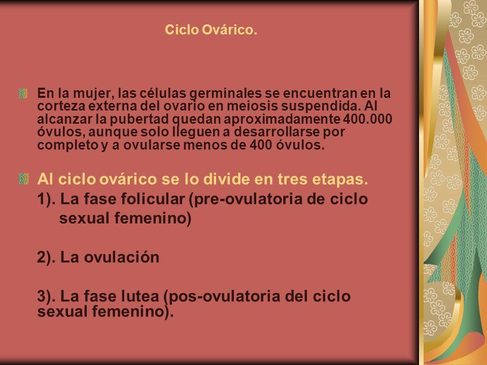 Ciclo Ovárico. En la mujer, las células germinales se encuentran en la corteza externa del ovario en meiosis suspendida. Al alcanzar la pubertad queda
