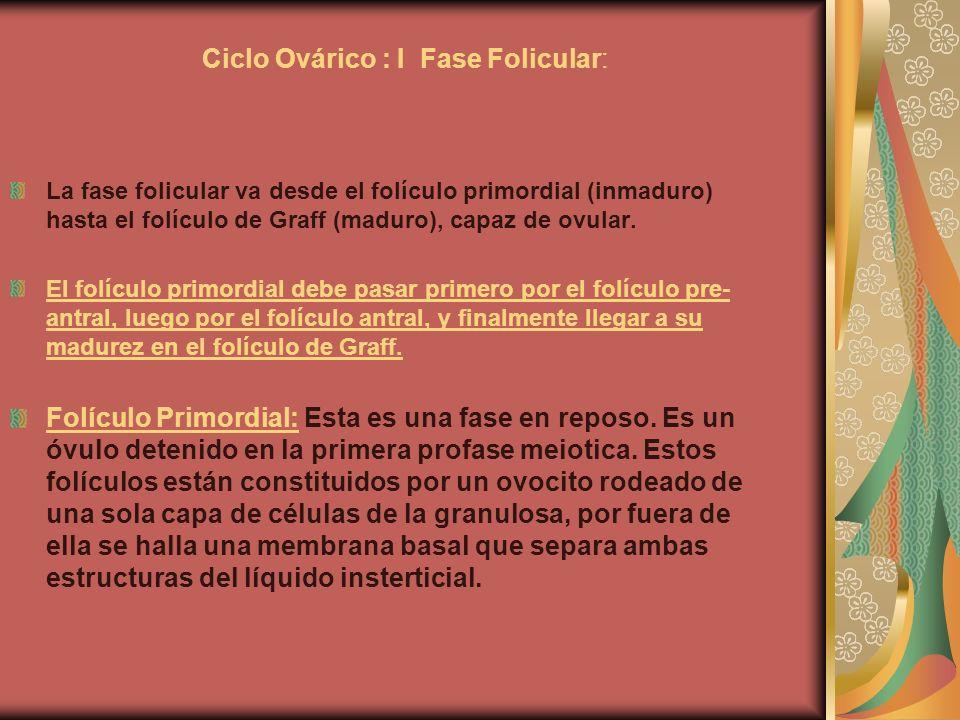 Ciclo Ovárico : I Fase Folicular: La fase folicular va desde el folículo primordial (inmaduro) hasta el folículo de Graff (maduro), capaz de ovular. E