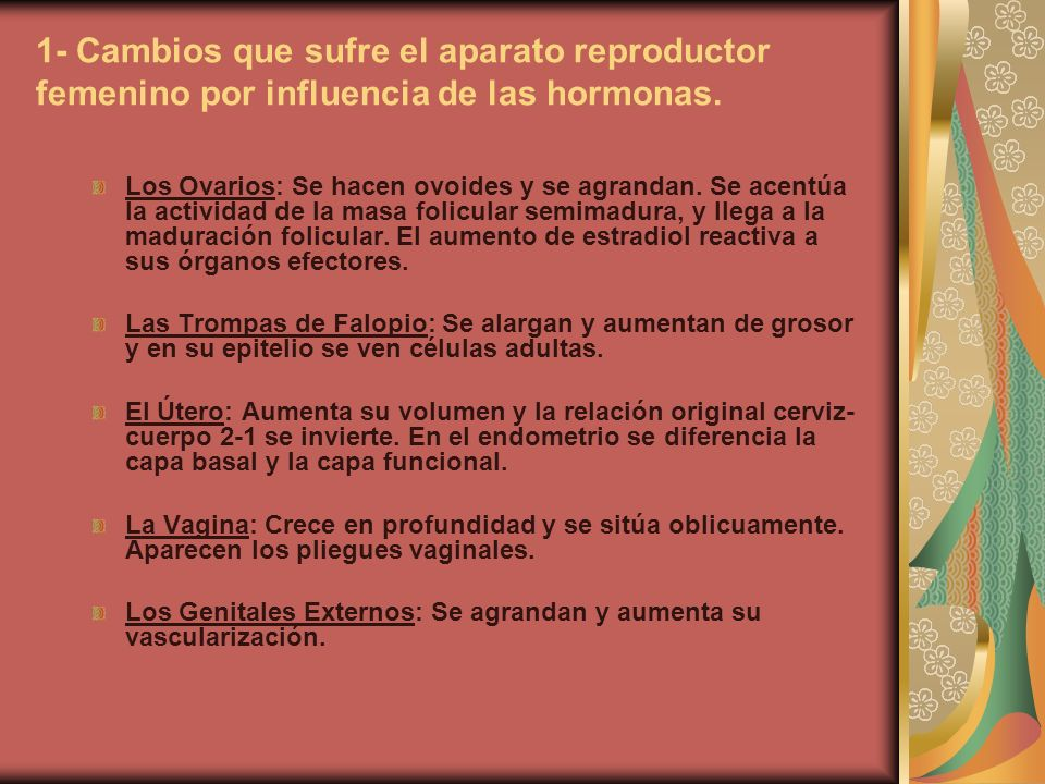 1- Cambios que sufre el aparato reproductor femenino por influencia de las hormonas. Los Ovarios: Se hacen ovoides y se agrandan. Se acentúa la activi