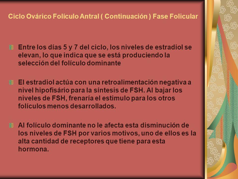 Ciclo Ovárico Folículo Antral ( Continuación ) Fase Folicular Entre los días 5 y 7 del ciclo, los niveles de estradiol se elevan, lo que indica que se