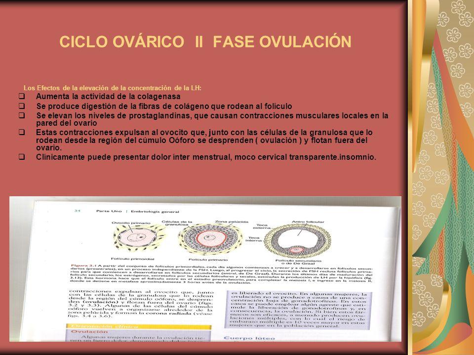CICLO OVÁRICO II FASE OVULACIÓN Los Efectos de la elevación de la concentración de la LH: Aumenta la actividad de la colagenasa Se produce digestión d