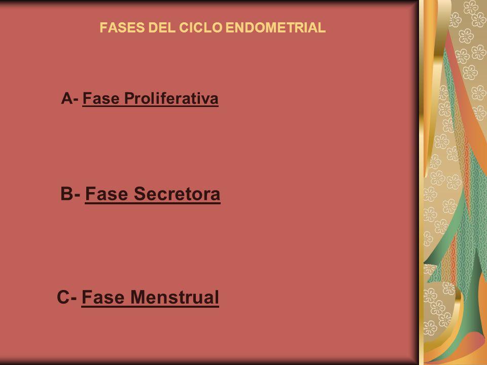 FASES DEL CICLO ENDOMETRIAL A- Fase Proliferativa B- Fase Secretora C- Fase Menstrual