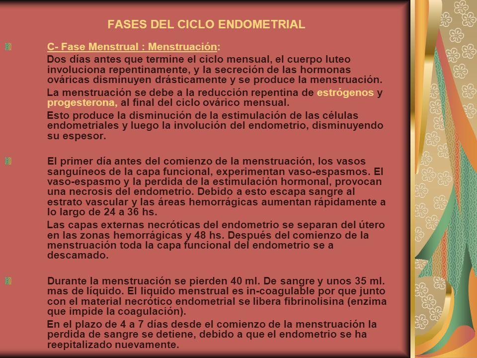 FASES DEL CICLO ENDOMETRIAL C- Fase Menstrual : Menstruación: Dos días antes que termine el ciclo mensual, el cuerpo luteo involuciona repentinamente,