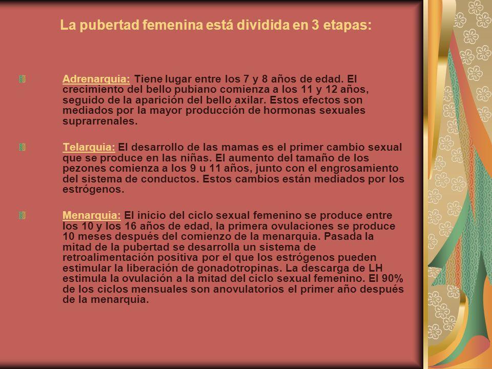 La pubertad femenina está dividida en 3 etapas: Adrenarquia: Tiene lugar entre los 7 y 8 años de edad. El crecimiento del bello pubiano comienza a los