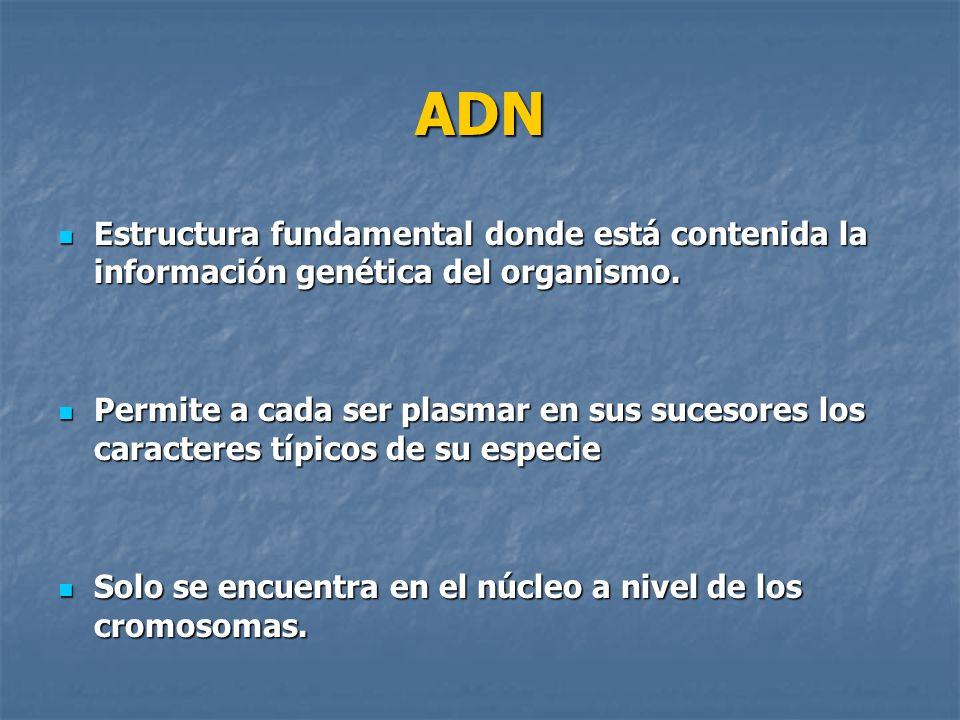 ADN Estructura fundamental donde está contenida la información genética del organismo. Estructura fundamental donde está contenida la información gené