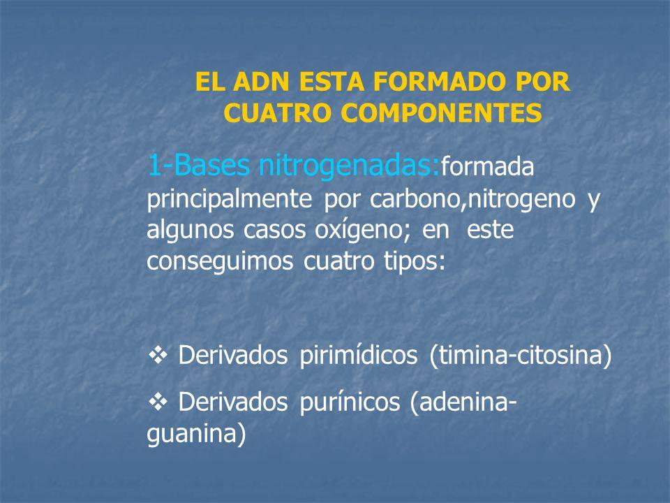 EL ADN ESTA FORMADO POR CUATRO COMPONENTES 1-Bases nitrogenadas: formada principalmente por carbono,nitrogeno y algunos casos oxígeno; en este consegu