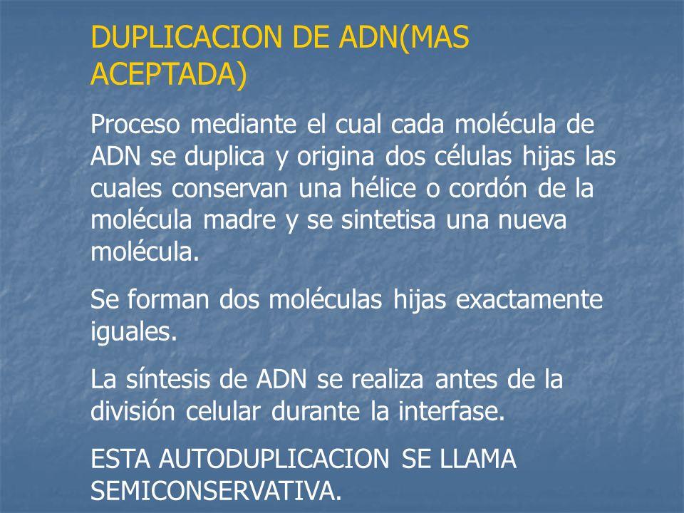 DUPLICACION DE ADN(MAS ACEPTADA) Proceso mediante el cual cada molécula de ADN se duplica y origina dos células hijas las cuales conservan una hélice