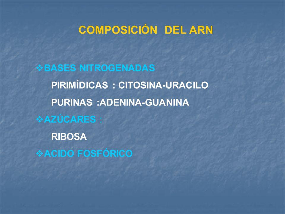 COMPOSICIÓN DEL ARN BASES NITROGENADAS PIRIMÍDICAS : CITOSINA-URACILO PURINAS :ADENINA-GUANINA AZÚCARES : RIBOSA ACIDO FOSFÓRICO