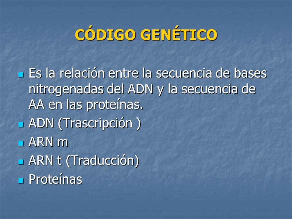 CÓDIGO GENÉTICO Es la relación entre la secuencia de bases nitrogenadas del ADN y la secuencia de AA en las proteínas. Es la relación entre la secuenc