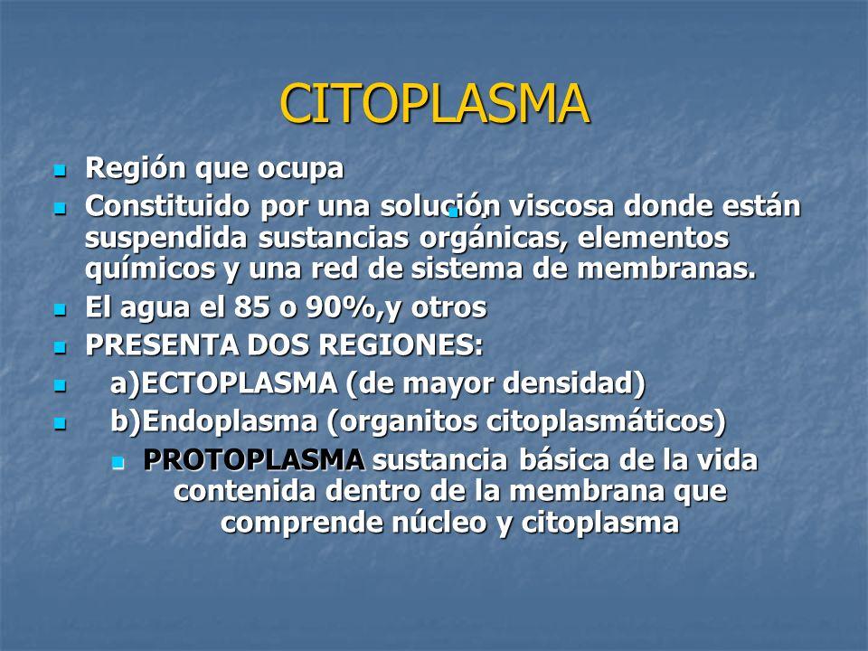 CITOPLASMA Región que ocupa Región que ocupa Constituido por una solución viscosa donde están suspendida sustancias orgánicas, elementos químicos y un