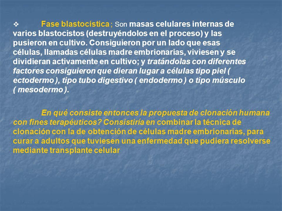 Fase blastocística ; Son masas celulares internas de varios blastocistos (destruyéndolos en el proceso) y las pusieron en cultivo. Consiguieron por un