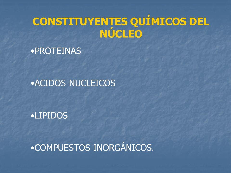 CONSTITUYENTES QUÍMICOS DEL NÚCLEO PROTEINAS ACIDOS NUCLEICOS LIPIDOS COMPUESTOS INORGÁNICOS.