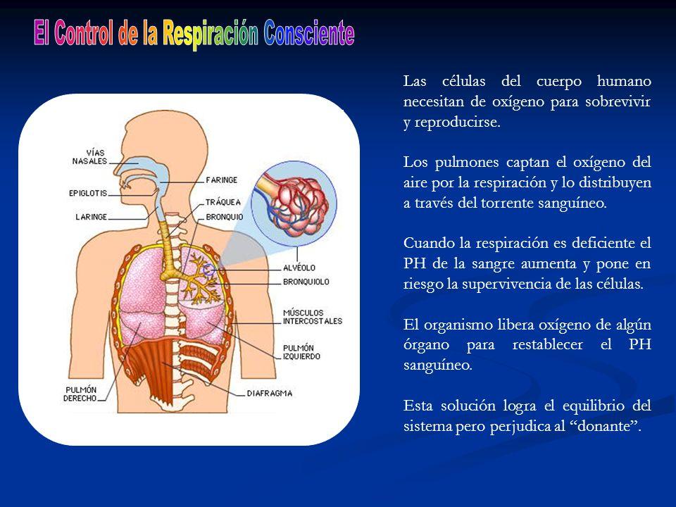 Las células del cuerpo humano necesitan de oxígeno para sobrevivir y reproducirse. Los pulmones captan el oxígeno del aire por la respiración y lo dis