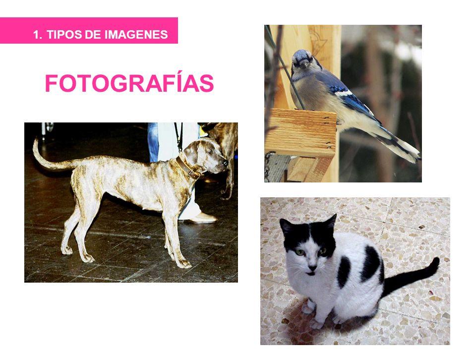 FOTOGRAFÍAS 1. TIPOS DE IMAGENES