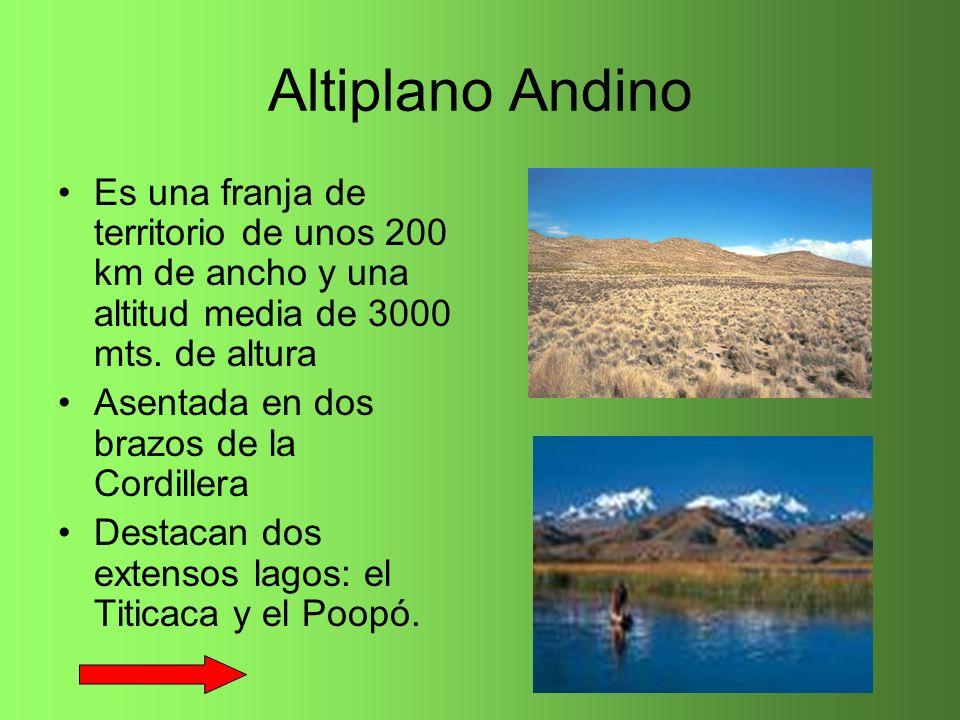 Altiplano Andino Es una franja de territorio de unos 200 km de ancho y una altitud media de 3000 mts. de altura Asentada en dos brazos de la Cordiller