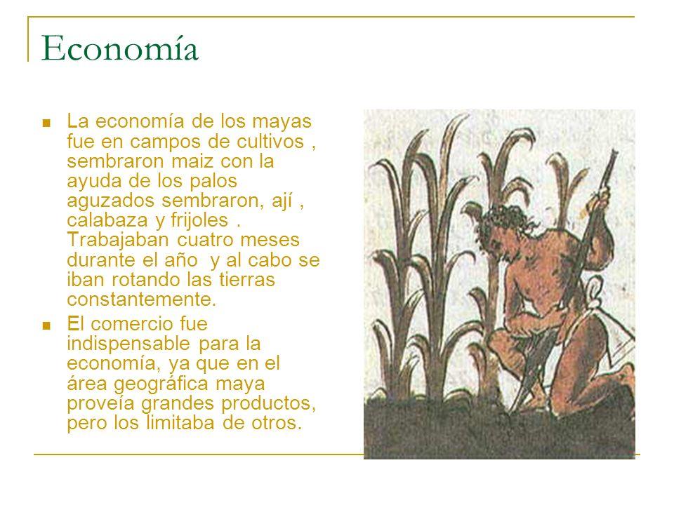 Economía La economía de los mayas fue en campos de cultivos, sembraron maiz con la ayuda de los palos aguzados sembraron, ají, calabaza y frijoles. Tr
