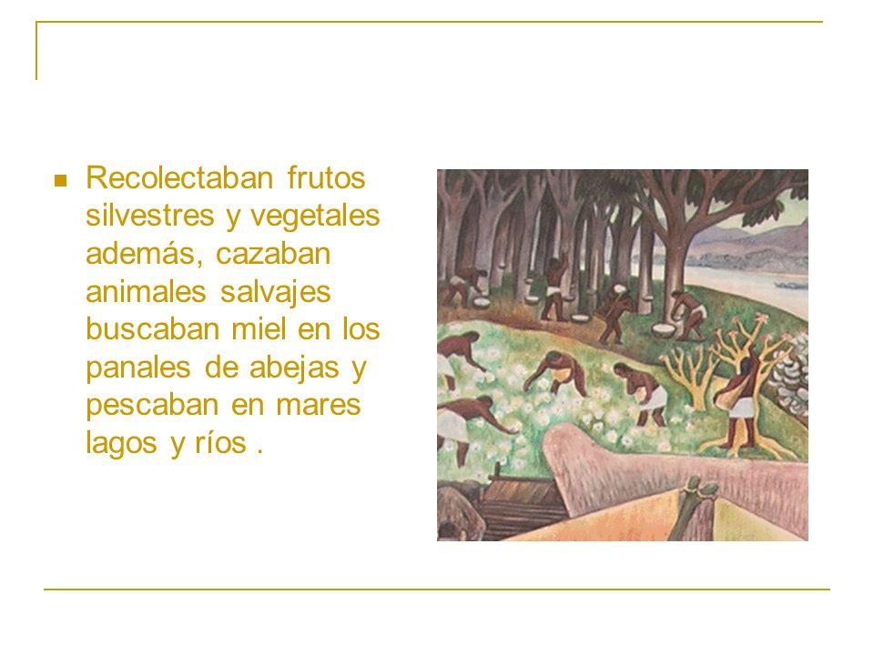 Recolectaban frutos silvestres y vegetales además, cazaban animales salvajes buscaban miel en los panales de abejas y pescaban en mares lagos y ríos.
