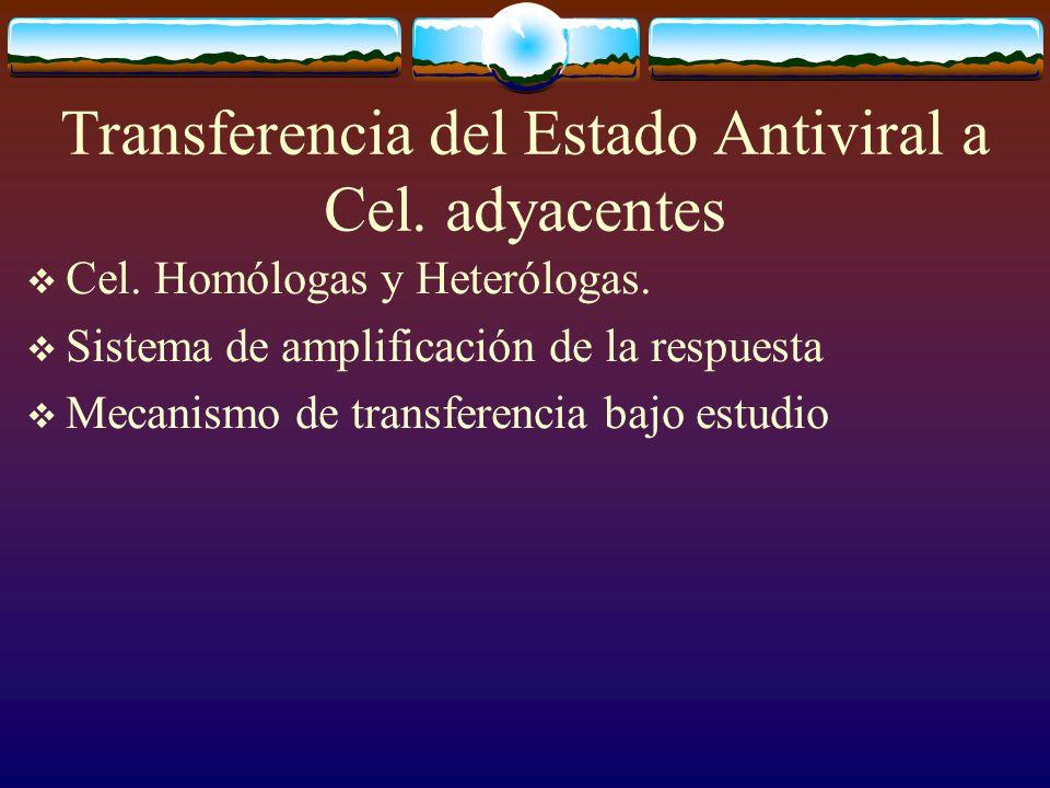 Transferencia del Estado Antiviral a Cel. adyacentes Cel. Homólogas y Heterólogas. Sistema de amplificación de la respuesta Mecanismo de transferencia