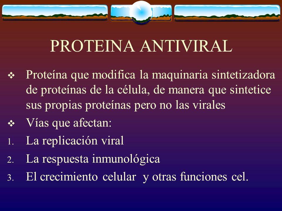 PROTEINA ANTIVIRAL Proteína que modifica la maquinaria sintetizadora de proteínas de la célula, de manera que sintetice sus propias proteínas pero no