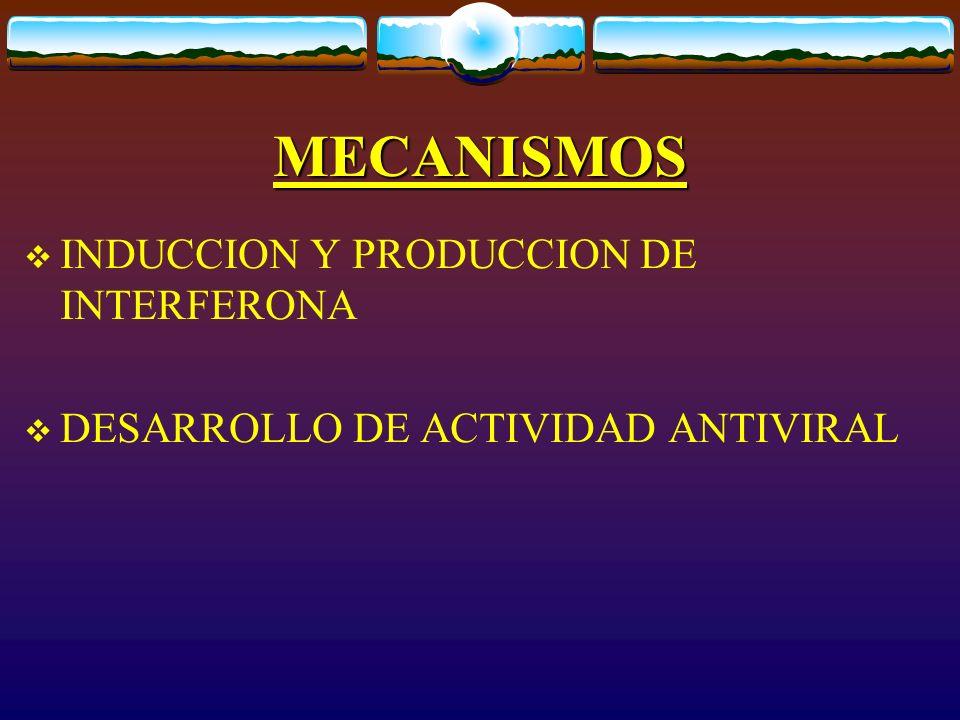MECANISMOS INDUCCION Y PRODUCCION DE INTERFERONA DESARROLLO DE ACTIVIDAD ANTIVIRAL
