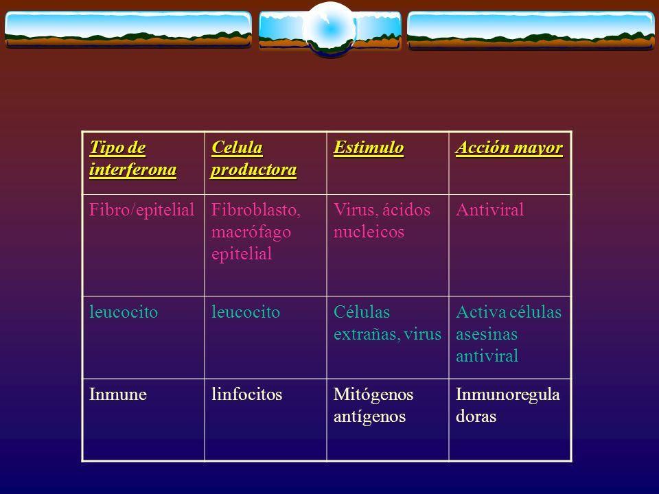 Tipo de interferona Celula productora Estimulo Acción mayor Fibro/epitelialFibroblasto, macrófago epitelial Virus, ácidos nucleicos Antiviral leucocit