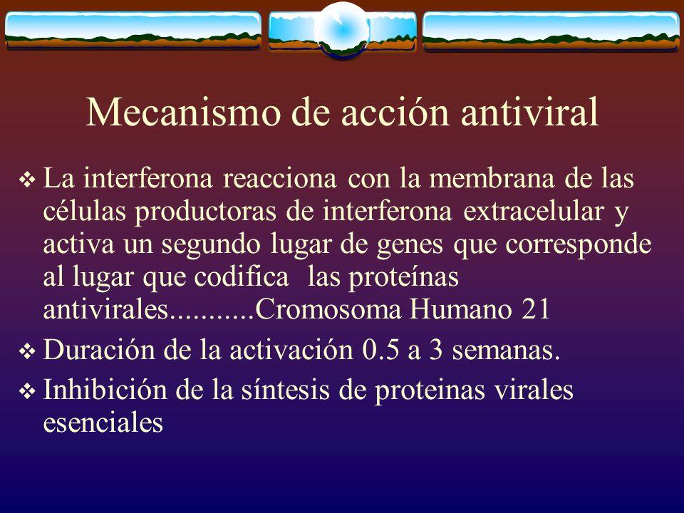 Mecanismo de acción antiviral La interferona reacciona con la membrana de las células productoras de interferona extracelular y activa un segundo luga