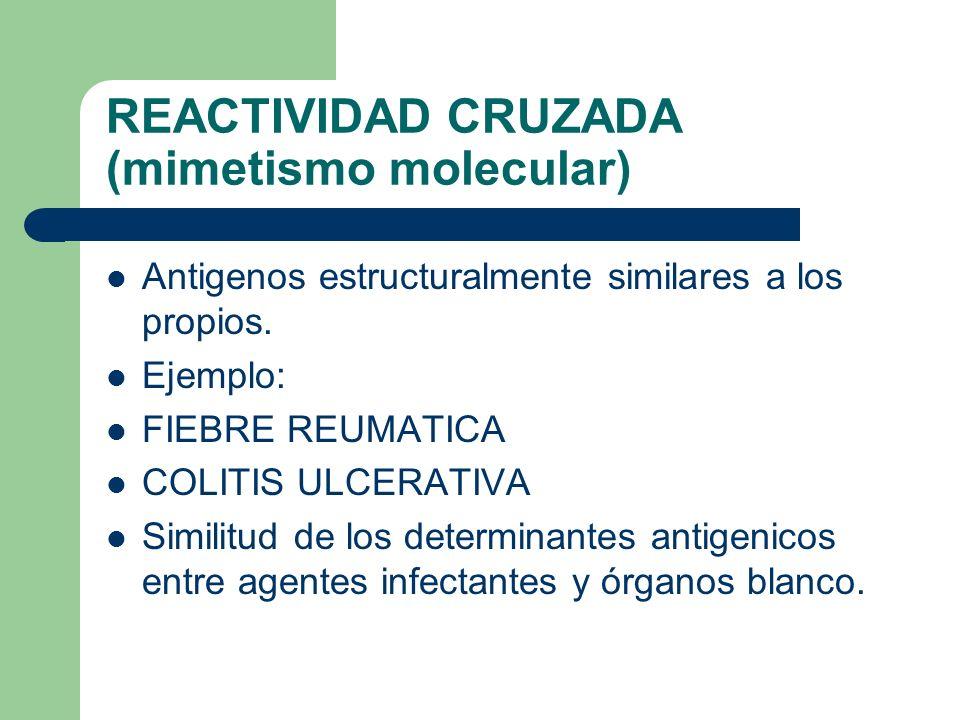 REACTIVIDAD CRUZADA (mimetismo molecular) Antigenos estructuralmente similares a los propios. Ejemplo: FIEBRE REUMATICA COLITIS ULCERATIVA Similitud d