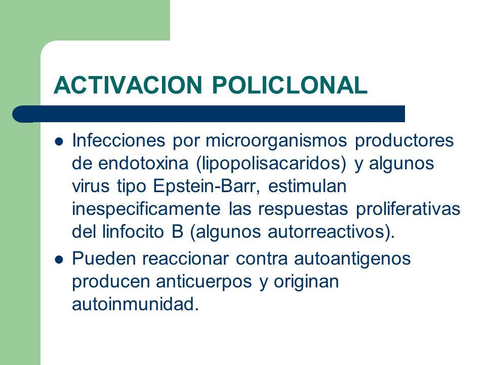 ACTIVACION POLICLONAL Infecciones por microorganismos productores de endotoxina (lipopolisacaridos) y algunos virus tipo Epstein-Barr, estimulan inesp