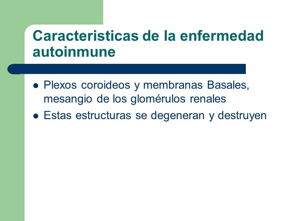 Caracteristicas de la enfermedad autoinmune Plexos coroideos y membranas Basales, mesangio de los glomérulos renales Estas estructuras se degeneran y