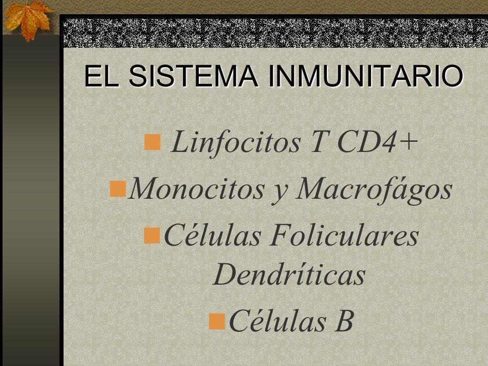 EL VIH AFECTA DOS SISTEMAS PRINCIPALMENTE Sistema Inmunitario SNC
