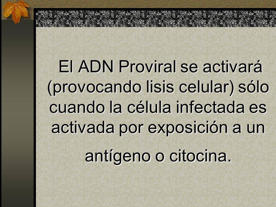 Infección de los Linfocitos T CD4+ Captación de una glucoproteína del VIH por la molécula CD4 Fusión con la membrana Formación de ADN Proviral (CADN)