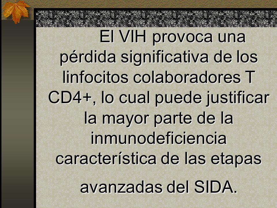 Mecanismos de infección indirectas de los Linfocitos T Pérdida de precursores inmaduros de las células T CD4+ Fusión de células infectadas y no infect