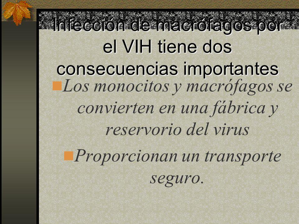 Infección de macrófagos y monocitos El VIH penetra en los macrófagos por fagocitosis o endocitosis. En macrófagos infectados se forma un gran número d
