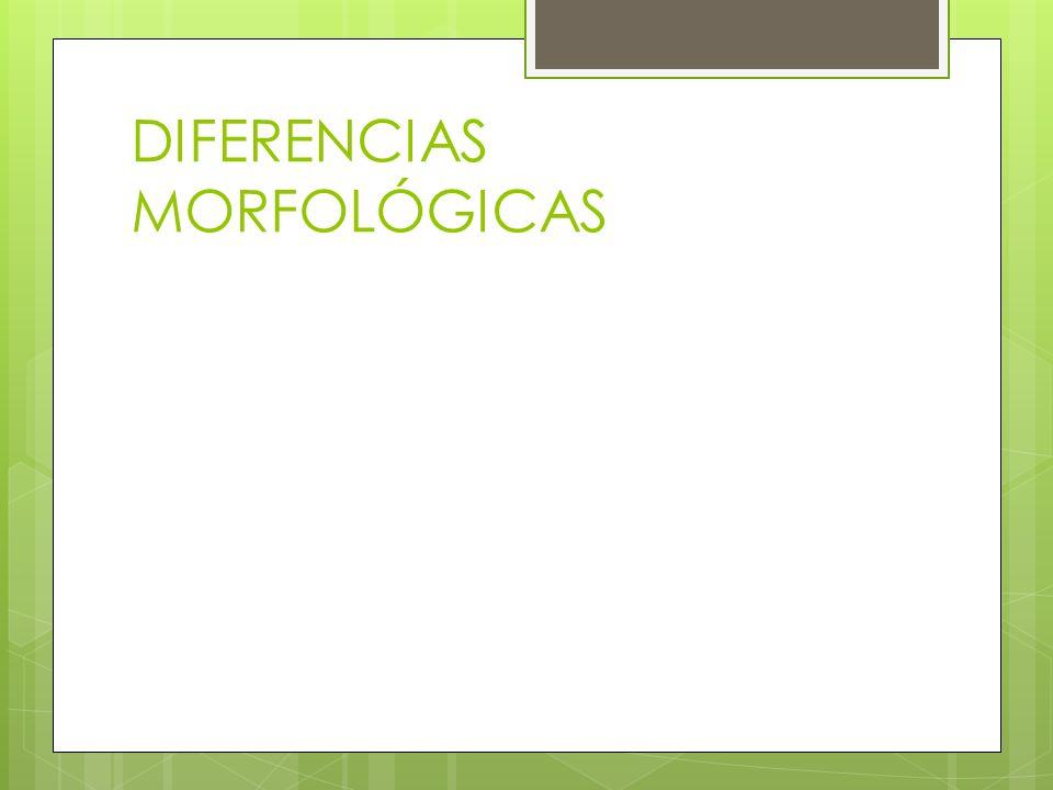 Se clasifican según: Diseño de las arcadas Morfología externa Morfología Interna Morfología Radicular Acuña Ramos, Clara patricia, Morfología dental (en línea) Consultado el 27 de junio de 2012.