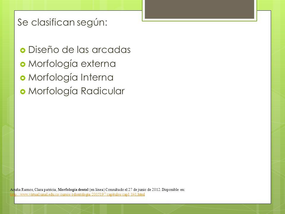 Se clasifican según: Diseño de las arcadas Morfología externa Morfología Interna Morfología Radicular Acuña Ramos, Clara patricia, Morfología dental (
