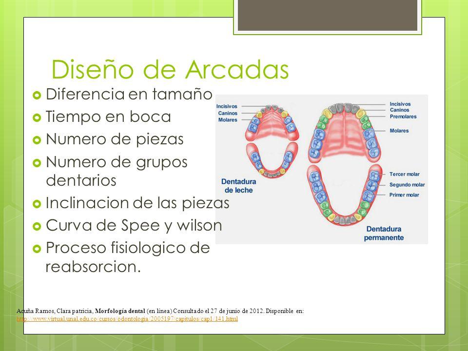 Diseño de Arcadas Diferencia en tamaño Tiempo en boca Numero de piezas Numero de grupos dentarios Inclinacion de las piezas Curva de Spee y wilson Pro
