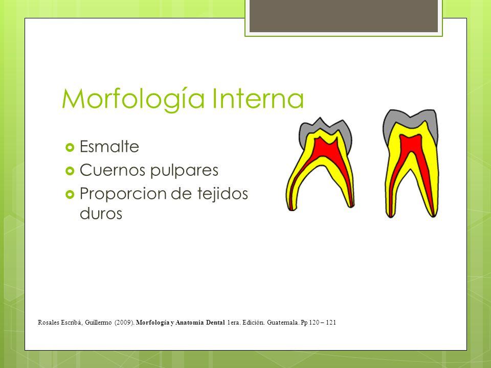 Morfología Interna Esmalte Cuernos pulpares Proporcion de tejidos duros Rosales Escribá, Guillermo (2009). Morfología y Anatomia Dental 1era. Edición.
