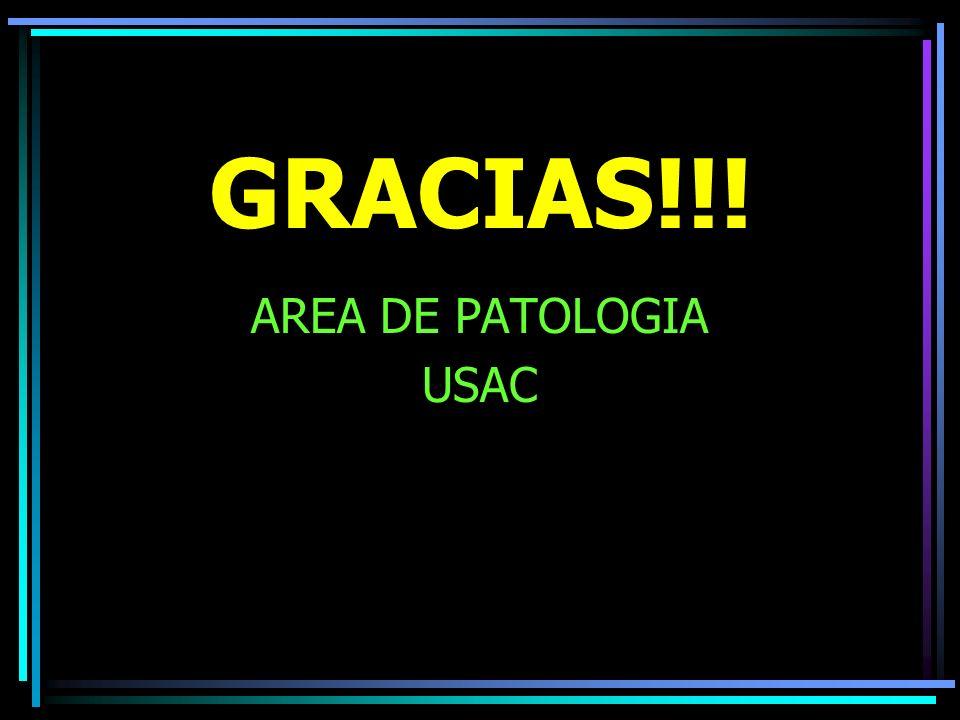GRACIAS!!! AREA DE PATOLOGIA USAC
