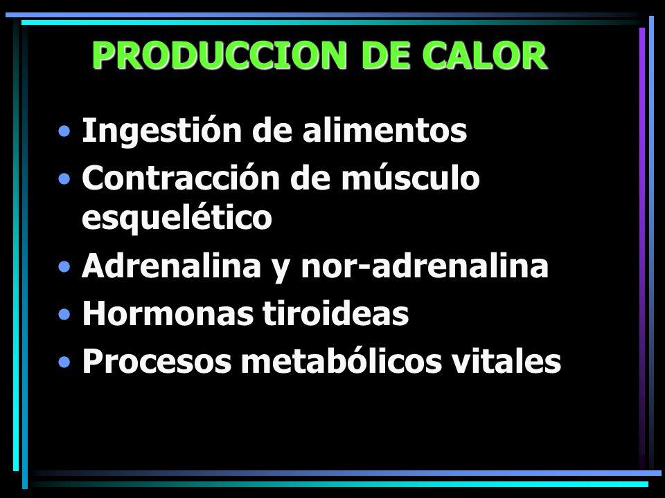 PRODUCCION DE CALOR Ingestión de alimentos Contracción de músculo esquelético Adrenalina y nor-adrenalina Hormonas tiroideas Procesos metabólicos vita