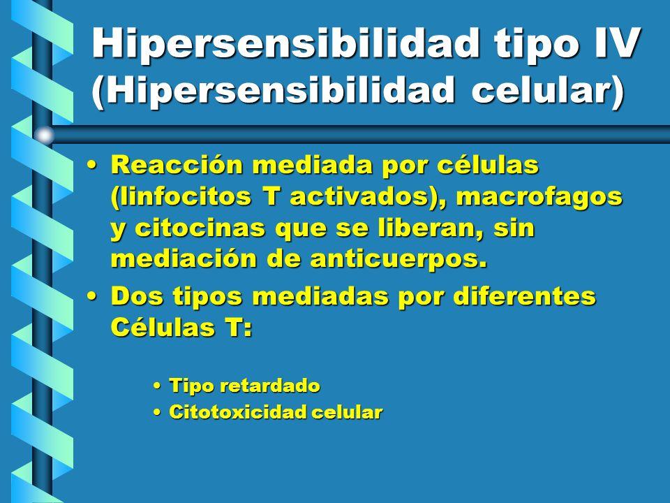 Hipersensibilidad tipo IV (Hipersensibilidad celular) Reacción mediada por células (linfocitos T activados), macrofagos y citocinas que se liberan, si