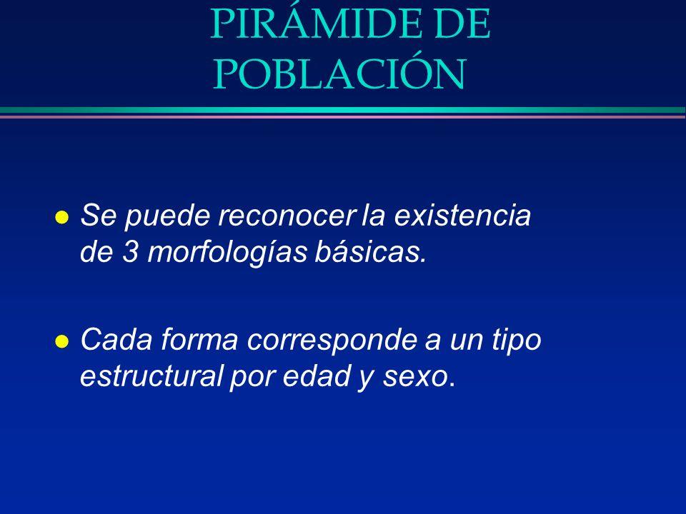 PIRÁMIDE DE POBLACIÓN l Se puede reconocer la existencia de 3 morfologías básicas. l Cada forma corresponde a un tipo estructural por edad y sexo.