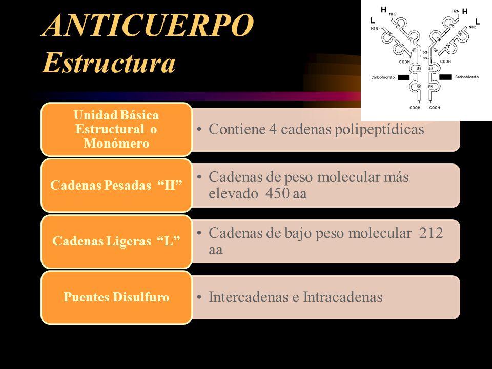ANTICUERPO Estructura Contiene 4 cadenas polipeptídicas Unidad Básica Estructural o Monómero Cadenas de peso molecular más elevado 450 aa Cadenas Pesa
